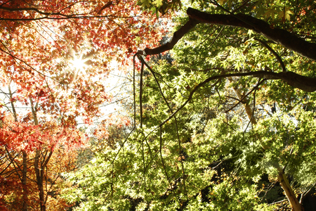 changing color: Leaves changing color in Autumn forest