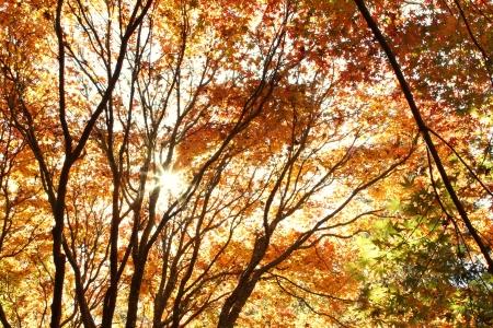 changing color: Hojas de cambio de color en el oto?o de los bosques