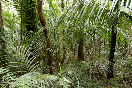 wilds: New Zealand tropical jungle forest Stock Photo