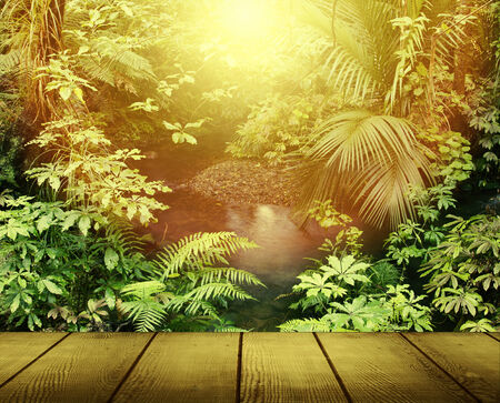 Sunlight in tropical jungle forest photo
