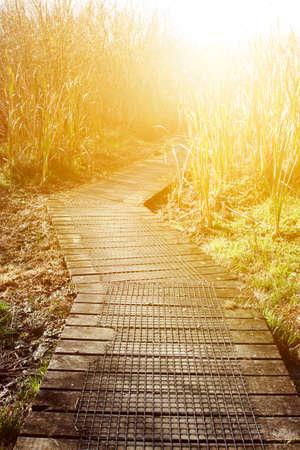 swampland: Boardwalk in New Zealand swampland