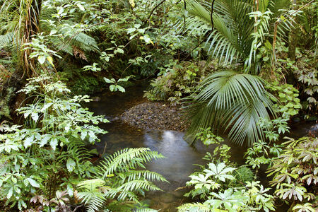 wilds: Lush foliage and stream in a rain forest