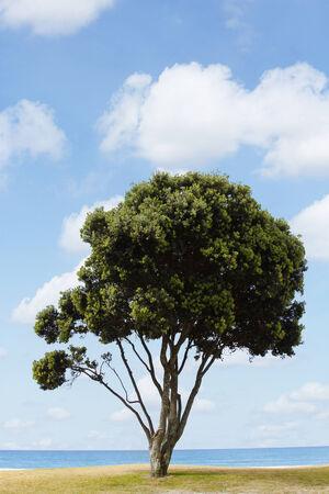 Single tree and blue sky
