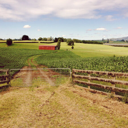 red barn: Red barn in corn field Stock Photo