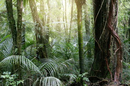 unspoilt: New Zealand tropical jungle forest Stock Photo