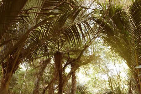 untamed: New Zealand tropical jungle forest Stock Photo
