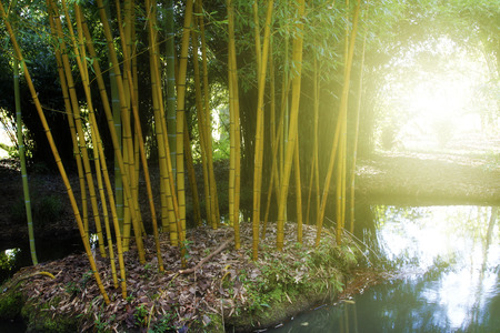 wilds: Light shining in bamboo forest Stock Photo