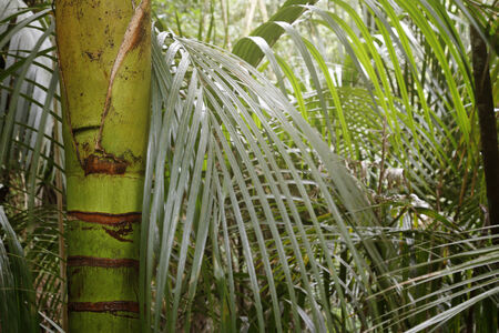 wilds: Lush green foliage in tropical forest