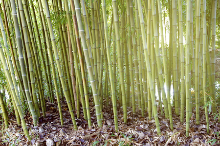 wilds: Sunlight in bamboo forest