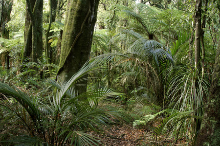 New Zealand tropical jungle forest photo