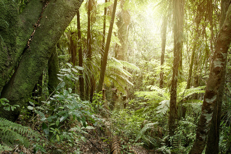 New Zealand tropical jungle forest Stock Photo