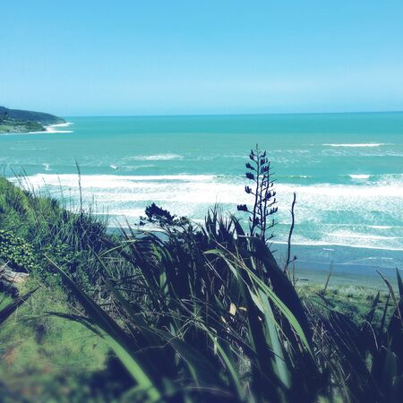 new zealand flax: Shoreline and water, Raglan, New Zealand
