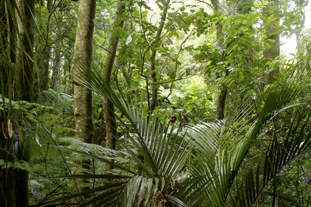 wilds: Lush green foliage in tropical jungle