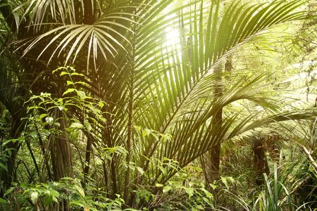 untamed: Lush green foliage in tropical jungle