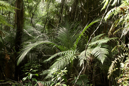 unspoilt: Trees and ferns in tropical jungle