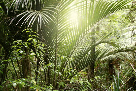 untamed: Sunlight in tropical jungle forest