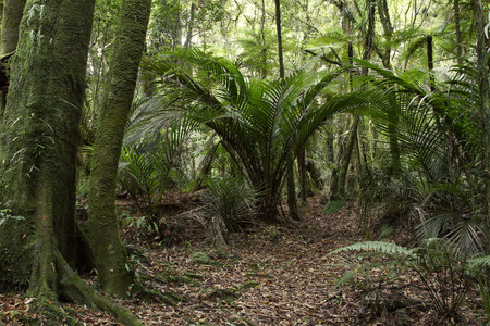 unspoilt: New Zealand tropical forest
