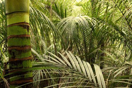 lush: Lush green foliage in tropical jungle