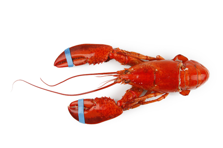 lobster isolated: Lobster isolated on plain background Stock Photo