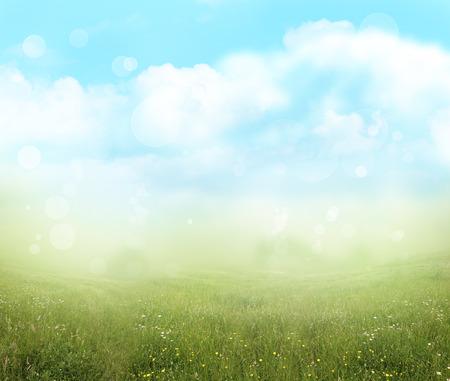 Prairie verte et le ciel bleu du printemps fond