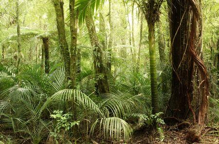 helechos: Los árboles y helechos en la selva tropical
