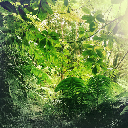 열대 정글에서 무성 한 녹색 단풍