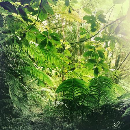 Weelderig groen gebladerte in de tropische jungle Stockfoto