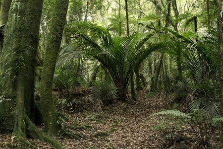 selva: Los árboles y helechos en la selva tropical
