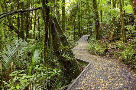 buisson: Sentier pédestre dans la forêt tropicale
