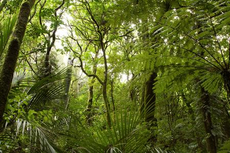 selva: Follaje verde enorme en la selva tropical