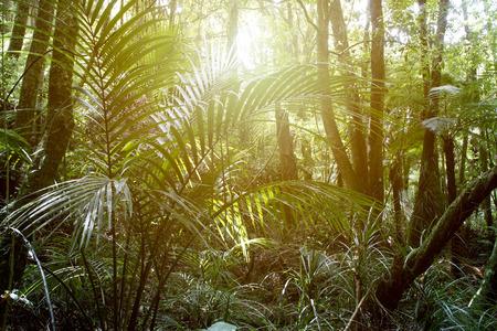 selva: La luz del sol que brilla en la selva tropical