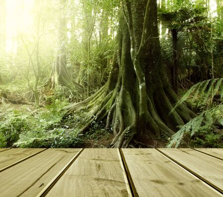 tropical forest: Wooden deck in tropical forest Stock Photo