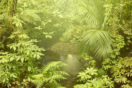 lush foliage: Lush foliage and stream in rain forest