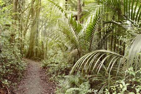 lush: Walking trail in tropical forest Stock Photo