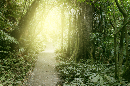 lush: Sunlit trail in tropical forest