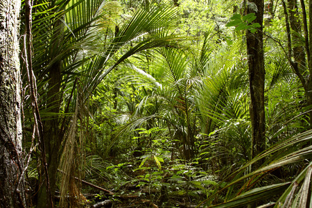 unaffected: Lush green foliage in tropical jungle