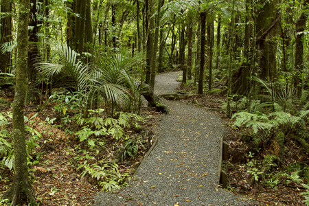walking trail: Walking trail in tropical forest Stock Photo