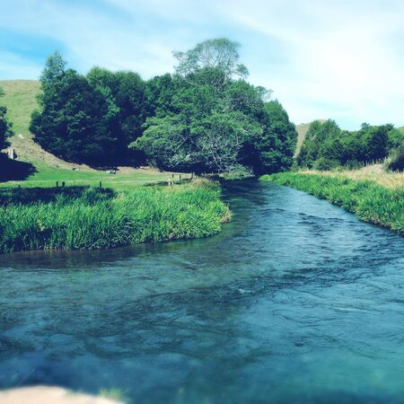 pure: Pure clean spring water stream