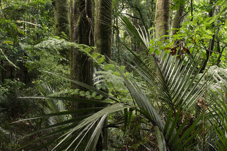 unspoilt: Lush green foliage in tropical jungle