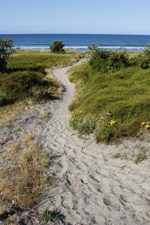 duna: Calzada a través de las dunas de arena que conduce a la escena de la playa