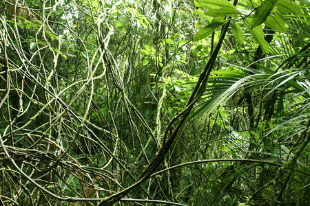 unspoilt: Vines and leaves in tropical jungle