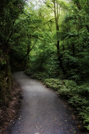 beauty in nature: Walking trail in tropical forest Stock Photo