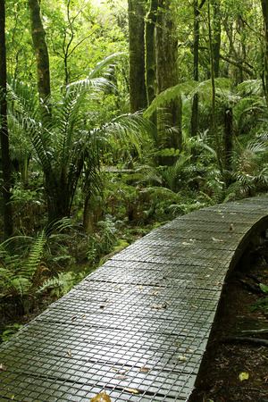 tropical forest: Boardwalk in lush tropical forest