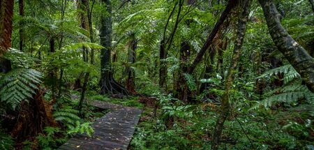 Boardwalk in lush tropical forest