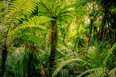 열 대 정글에 무성 한 녹색 단풍 스톡 콘텐츠