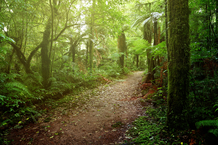 Walking trail in tropical forest Фото со стока