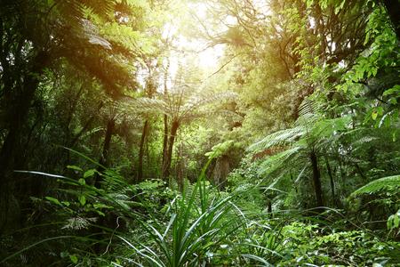 Tree canopy in tropical jungle Stok Fotoğraf