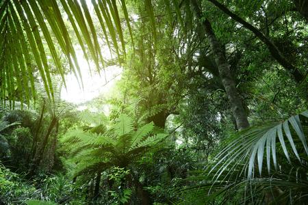 Tree canopy in tropical jungle Фото со стока