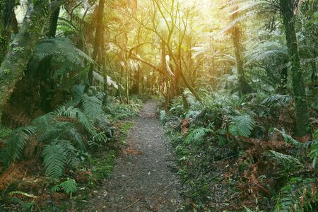 Walking trail in tropical forest 写真素材