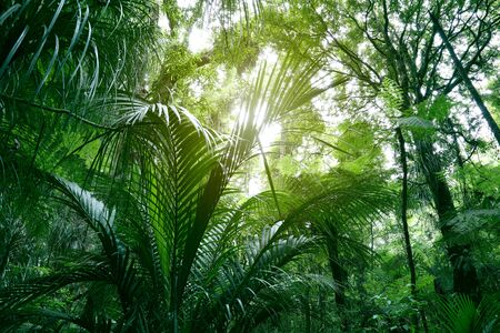 Tree canopy in tropical jungle Imagens